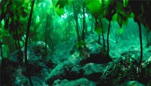 ce-sunt-algele